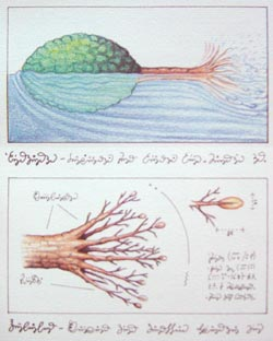 Swimming 'tree,' from the Codex Seraphinianus